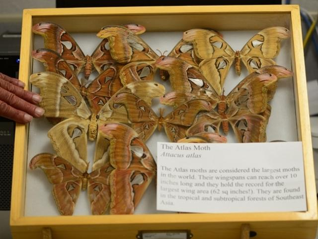 Bohart Museum of Entomology